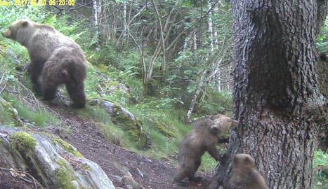 Al costat de l'arbre, les dos cries d'ós nascudes al gener.