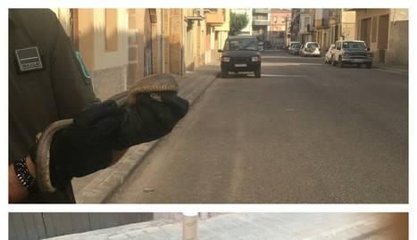 L'exemplar va ser trobat en aquest carrer del nucli urbà.