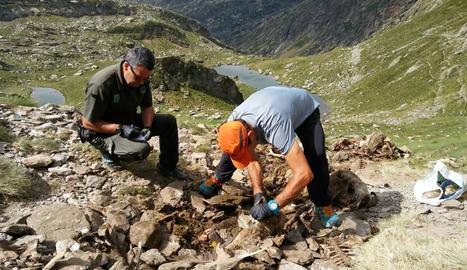 Agents rurals van inspeccionar els cossos de les ovelles, ja en estat de descomposició.