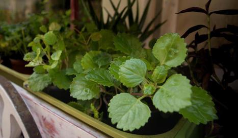 Plantes que ho aguanten tot