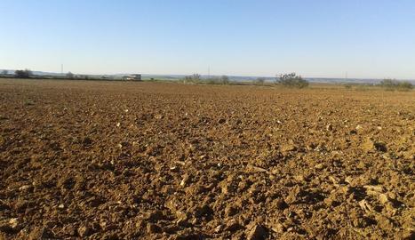 Una zona agrícola dels Monegres.