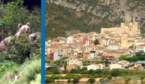 Els Rurals investiguen a Os de Balaguer avisos sobre la presència d'un ós