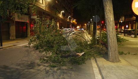 Cauen branques d'arbres a Cappont