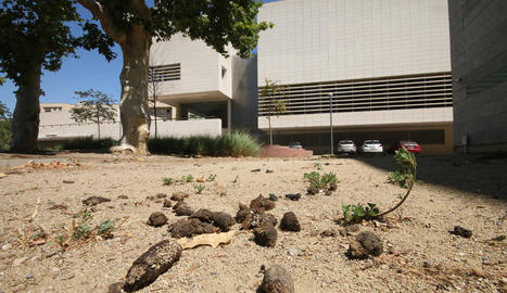 Queixes per excrements de gos a la plaça darrere del Museu de Lleida