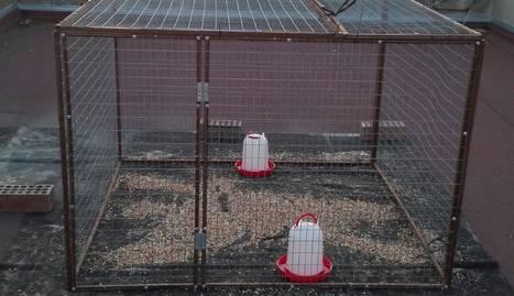 Una de les gàbies que es col·locaran al Palau.