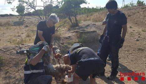 Bombers i Brigada Municipal, ahir després de rescatar el gos. A la dreta, l'animal atrapat a l'interior del tub de reg.