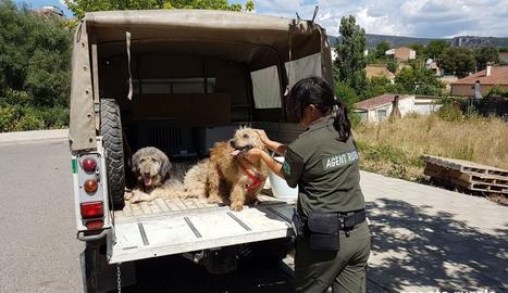 Els dos gossos rescatats de la finca de Conca de Dalt.