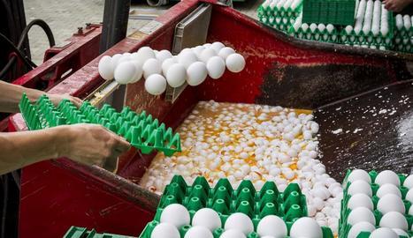 Personal rebutja ous contaminats en una granja d'Holanda.