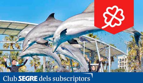 Els dofins també són protagonistes a l'Aquopolis Costa Daurada.