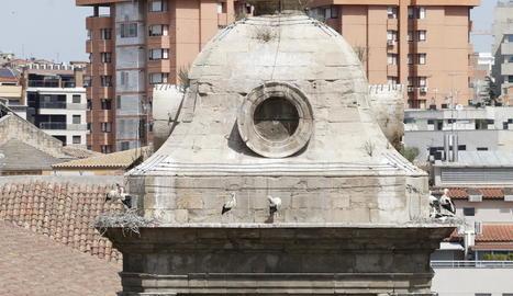 Imatge presa aquesta setmana de cigonyes en una de les torres.