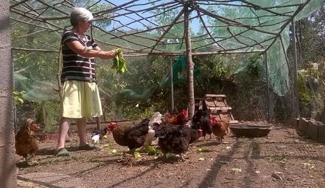 Una veïna de les Valls d'Aguilar alimenta amb sobres gallines que cria per a consum propi.
