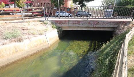 Algues a la séquia Major de Pinyana al seu pas per Ciutat Jardí, a Lleida.