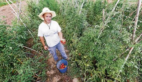 Dani Rovira, amb algunes de les tomates que conrea en aquesta parcel·la del viver municipal.