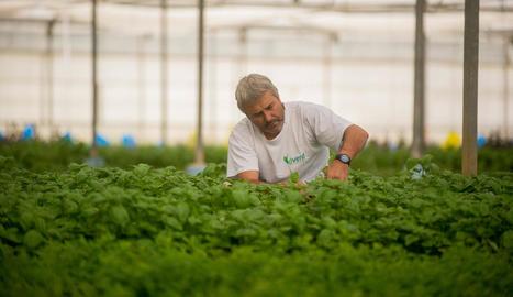 renovació. Al capdavant de Dverd hi ha Joan Farré, que va reorientar el negoci familiar a les herbes aromàtiques.
