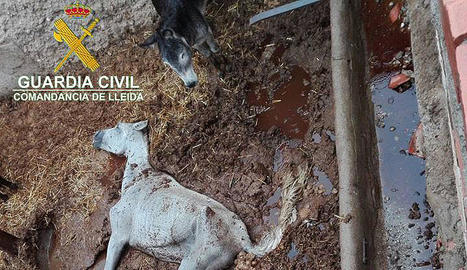 Els dos cavalls trobats morts en un corral de Menàrguens.