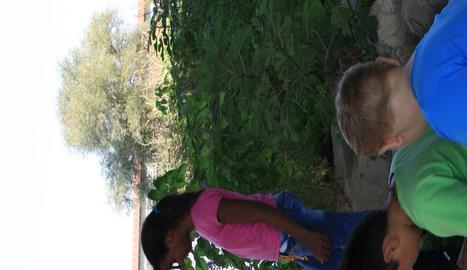 Projecte del Màrius Torres entorn al riu Segre