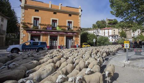 El ramat d'ovelles creuant el municipi de Senterada al Pallars Jussà.