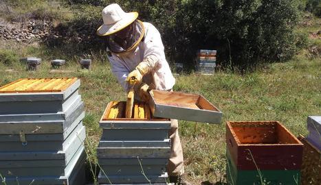 Imatge d'arxiu d'un apicultor de Lleida.