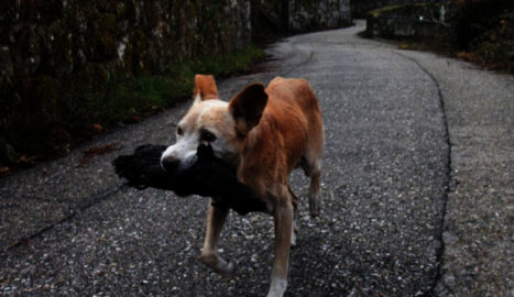 La commovedora imatge d'una gossa amb la seva cria calcinada es converteix en símbol de la tragèdia gallega