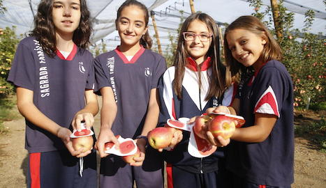 Els escolars van visitar la finca d'Agro Massot i van collir algunes pomes pink lady.