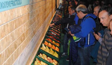 Exposició de fruita a la Jornada de l'IRTA a Mollerussa.