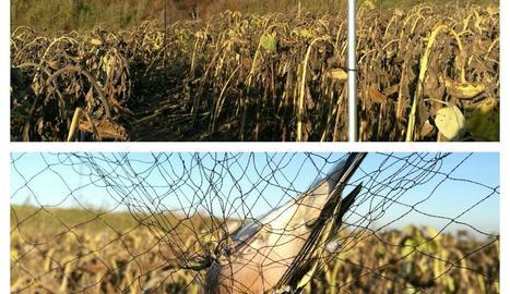 Un ocell atrapat a la xarxa japonesa.