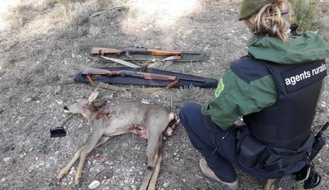 Imatge dels rifles i el cabirol decomissat.