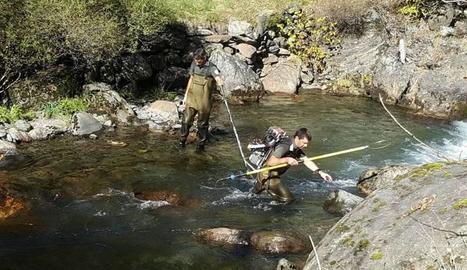 Els agents de Medi Ambient pescant truita autòctona.