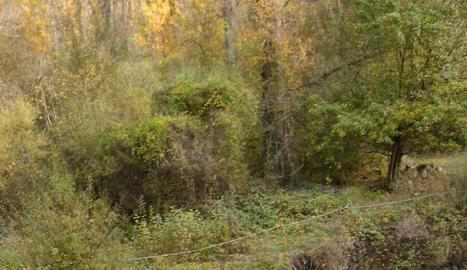 Imatge del riu Flamisell al seu pas per la Vall Fosca.