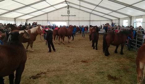 La desena edició del concurs va reunir un centenar d'exemplars de comarques del Pirineu.