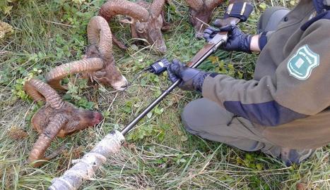 Els caçadors van amagar el rifle amb el silenciador i quatre dels animals que havien abatut.