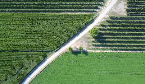 regularitat. Els camps de fruiters i els de blat de moro s'alternen en un paisatge de regadiu marcat per la simetria gairebé perfecta dels conreus.