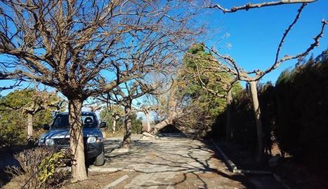 El vent ha tombat un arbre a la partida de Grenyan