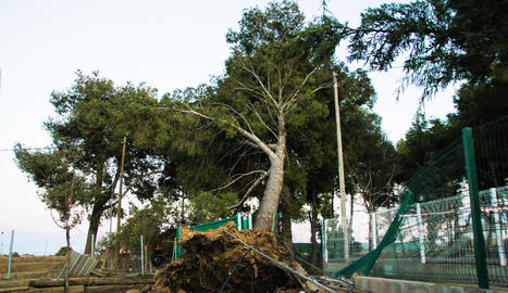L'arbre caigut a Vallcalent a conseqüència del vent, que va obligar a tancar la zona per prohibir el pas.