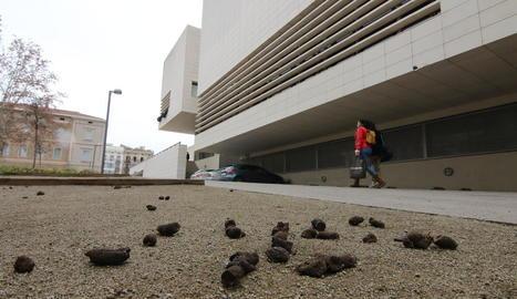 L'entorn del Museu, de nou ple d'excrements de gos