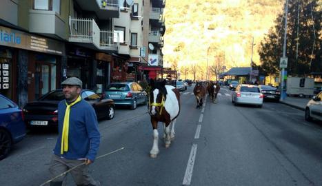 Els cavalls amb cintes grogues van travessar ahir diverses poblacions, a la foto, Sort.