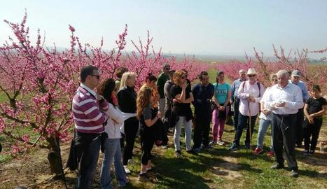 Imatge d'una de les visites guiades l'any passat a Torres de Segre per disfrutar de la floració.