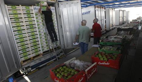 Camions de fruita per exportar a Edullesa.