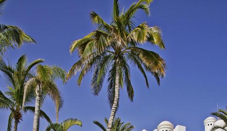 postes de sol. A les platges de Tenerife, les postes de sol sobre l'Atlàntic són espectaculars.