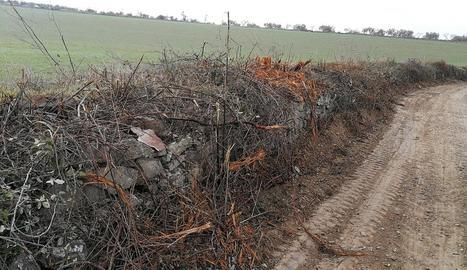 Imatge del camí de les Garrigues i arbres talats.