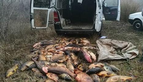 Alguns dels peixos decomissats als furtius.
