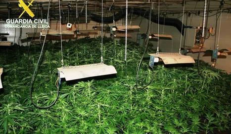 Els agents van decomissar un total de 634 plantes en dos sales condicionades per al cultiu.
