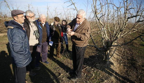 Miarnau explicant la tècnica de la poda en un dels seus camps de fruiters de Torres de Segre.
