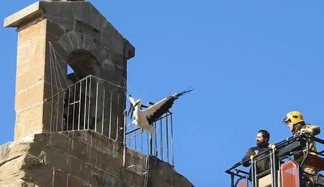 Els Bombers rescaten la primera de les cigonyes que van quedar ahir atrapades a Sant Martí.