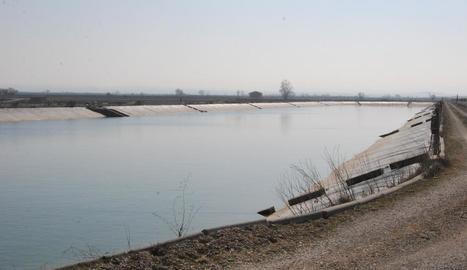 La bassa de Mollerussa on s'ha detectat el musclo zebra i s'actuarà ben aviat.