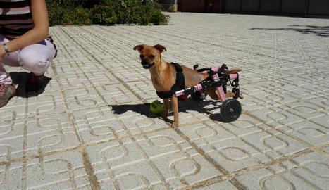 Amb la seva cadira de rodes, la Nanda es passeja per tot arreu.