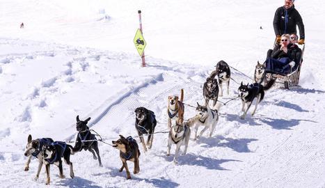 en forma. Un dels requisits per ser múixer és estar en forma, ja que s'ha de fer equip amb els gossos.