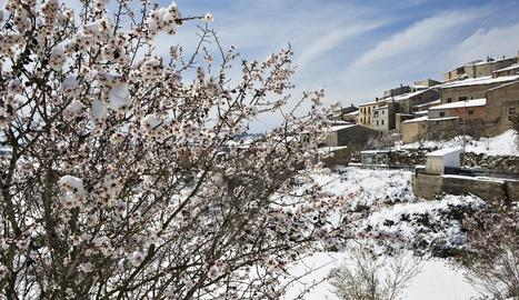 Imatge d'ametllers coberts de neu captada ahir a Talavera.