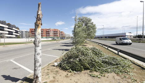 Un arbre caigut ahir a causa del fort vent a la carretera TV-2005 a Aiguamúrcia (Tarragona).