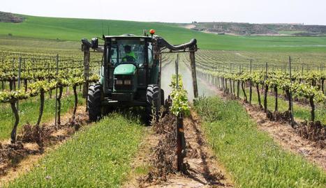 Aplicació de fitosanitaris en una finca de vinya.